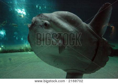 Luna-Fish