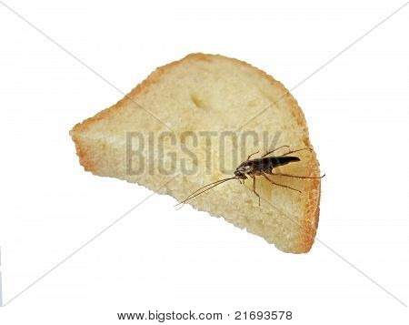 Brown Cockroach On White Bread, Nature Details