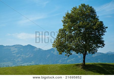 Single Foliage Tree And Green Meadow
