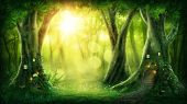 Dark magic forest with sunshine poster