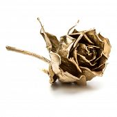 One gold rose isolated on white background cutout. Golden dried flower head, romance concept. poster