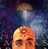 stock photo of shroom  - Mushroom and man - JPG