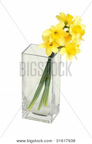 narcissuses in a square vase
