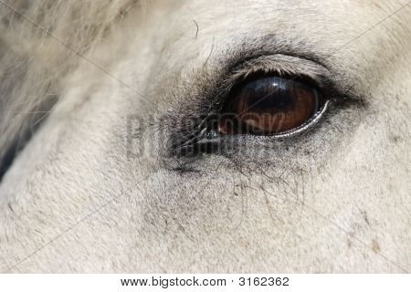 Horse Head Close-Up