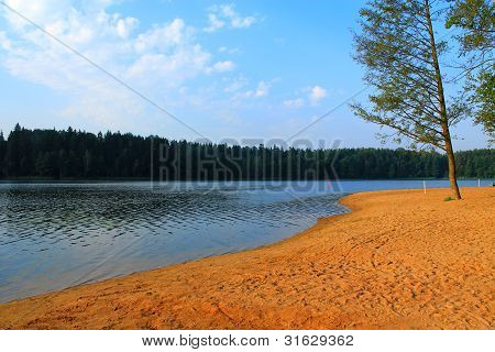 Shore Of The Lake In The Woods