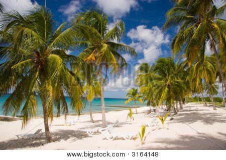 Palm Lined Beach, Playa Maria