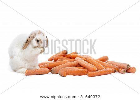 Rabbit Eating Carrots