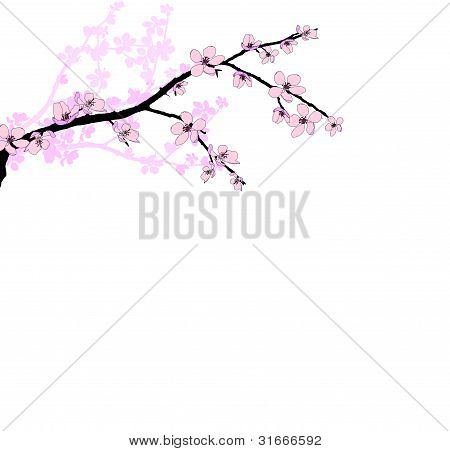 Branch of beautiful seasonal pink cherry blossom
