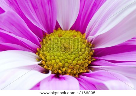 Abstract Texture Of A White Purple Green Flower