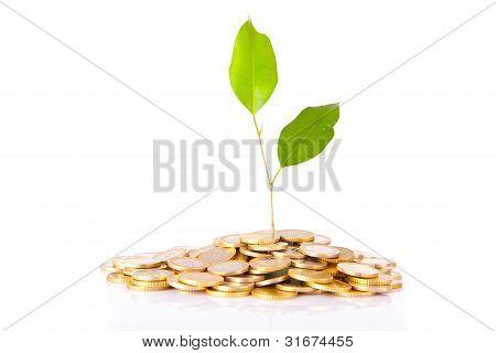 Monedas y planta