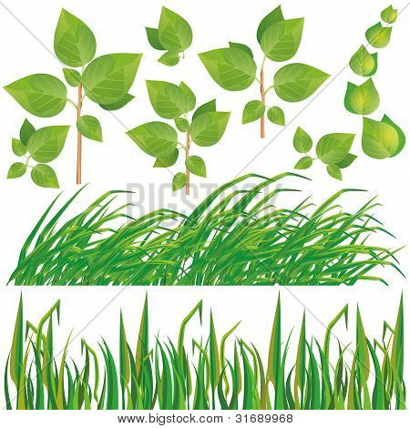 Set Of Green Leaves And Grass