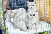 Exhibition Or Fair Cats. Cats In Cages. poster