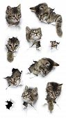 Cats In Holes Of Paper, Little Grey Tabby Kittens Peeking Out Of Torn White Background, Nine Funny P poster
