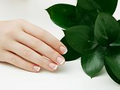Skincare. Beautiful Delicate Hands With Manicure And Green Leaves, Closeup Isolated On White. Photo  poster