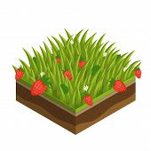 Grass And Soil Tile With Layers Isometric Vector. Fresh Summer Green Grass With Leave, Daisie, Flowe poster