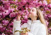 Tender Bloom. Aromatic Blossom Concept. Girl Tourist Posing Near Sakura. Child On Pink Flowers Of Sa poster
