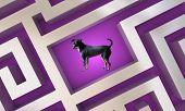 Dog Pet Animal Lost Found Maze 3d Illustration poster