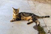 Adult Stray Tabby Cat With Golden Eyes, Looking Curious At The Camera. Adopt Dont Shop, Spay And Ne poster