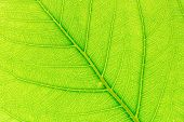 Tree Leaf Nature Background. Close Up Background Nature Of Tree Leaf. Tree Leaf For Design. Nature T poster