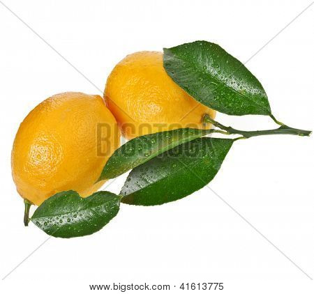 Fresh Lemon fruits isolated on a white background