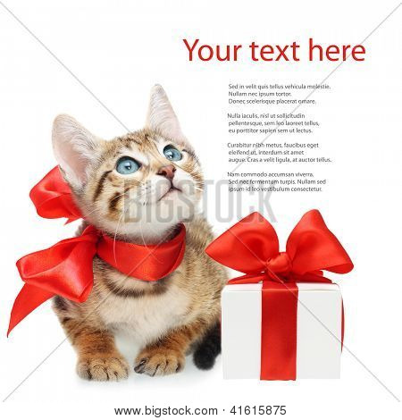Kitten looking up with red bow and present box on a white background