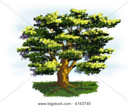 Old Tree In Springtime