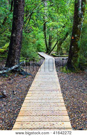 Native forest walk