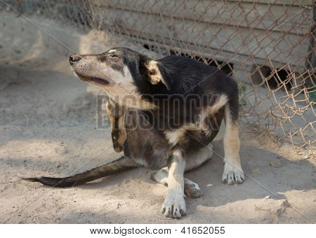 Shelter Dog  Scratching