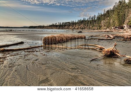 Logs And Sea Debris On Beach With Forest