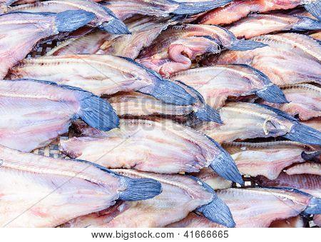Fresh Dried Fish