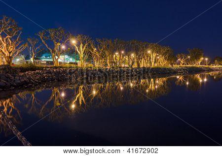 Coral Trees in North Embarcadero Marina Park at night in San Diego, California.