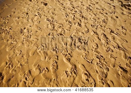 sand trampled with barefoot crowd