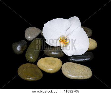 weiße Orchidee und Meer Steine auf schwarzem Hintergrund