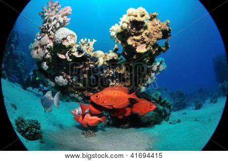 Common Bigeyes Under The Corals
