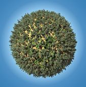 image of afforestation  - Small planet with coniferous forest - JPG