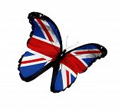 stock photo of olympiad  - English flag butterfly flying isolated on white background - JPG