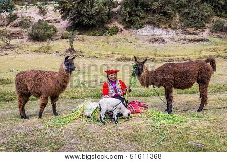 Cuzco, Peru - July 13, 2013: woman feeding alpacas and sheep near Tambomachay Incas ruins in Cuzco Peru on july 13th, 2013. Tambomachay is an archaeological site associated with the Inca Empire.