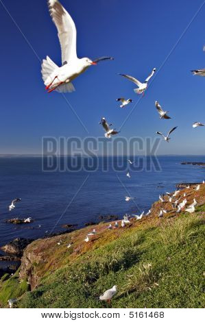 A Flock Of Seagulls On Coast