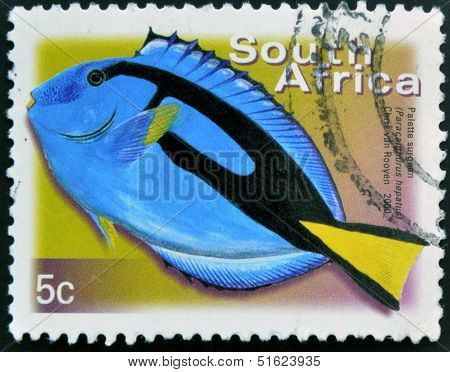 A stamp printed in RSA shows palette surgeon Paracanthurus hepatus