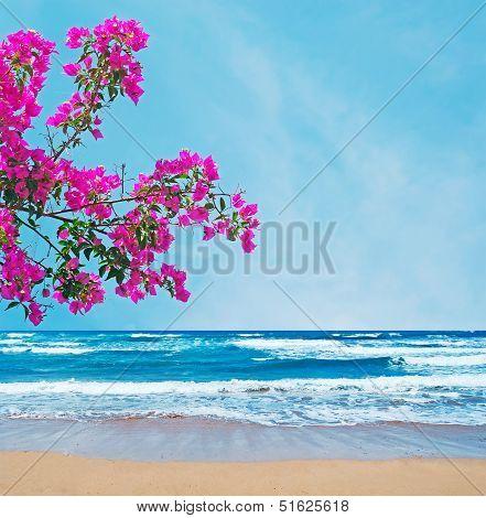 Pink Bougainvillea Over A Golden Shore
