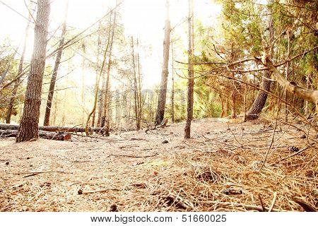 Forest In Mar De Las Pampas