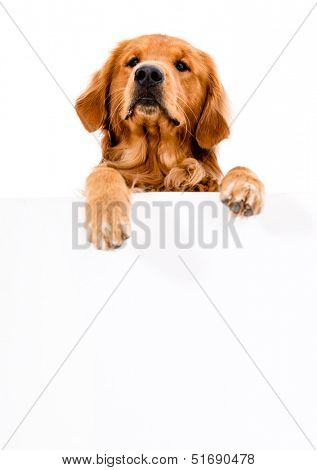 Cute dog with a banner - isolated over white background