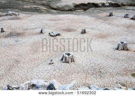 Dry River Bed with Tree Stumps