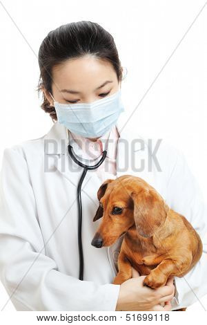 Female veterinarian with dachshund dog