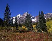 Maroon Bells & Conifer Trees poster