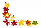 Colorful Autumn Leaves Frame