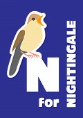 stock photo of nightingale  - N for the nightingale an animal alphabet for the kids - JPG
