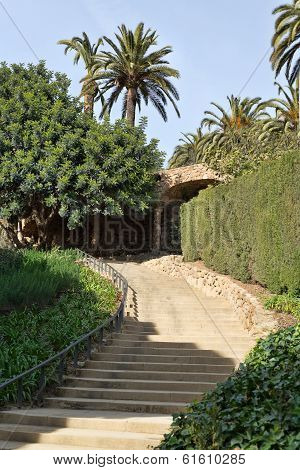 Staircase In Greenery And Palm Trees