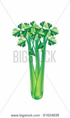 A Fresh Green Celery On White Background