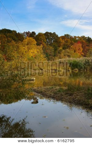Wildlife Preserve Fall Foliage
